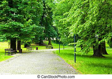 公园, 在中, 春天