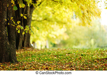 公园, 秋季
