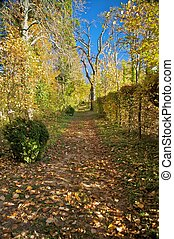 公园, 路径, 在中, 秋季