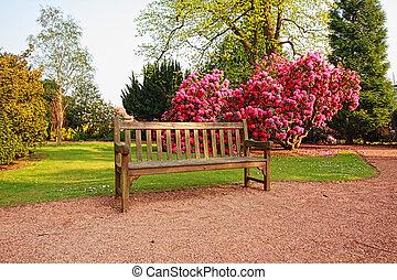 公園, アザレア, 古い, 美しい, 木