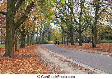 公園, 中に, 秋シーズン