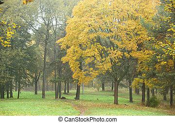 公園, 中に, 秋