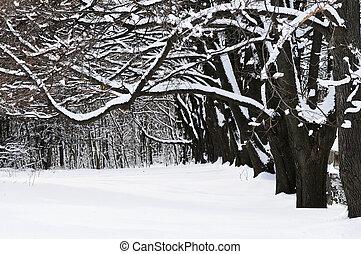 公園, 冬