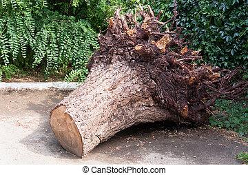 公園, 切り株, 木を根こそぎにした