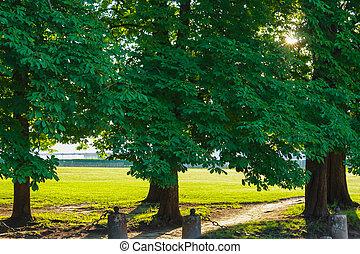 公園, 古い, 木, アリー, 絵のよう