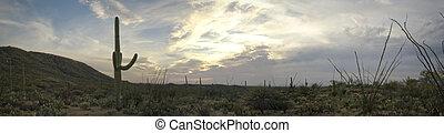 公園, 国民, saguaro, 砂漠, アリゾナ