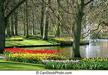 公園, 在, 春天時間