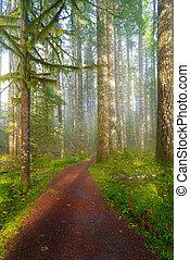 公園, 州, ワシントン, ハイキング小道