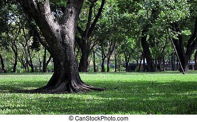 公園, 平和である