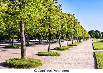 公園, 樹