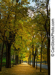公園, 秋, アリー