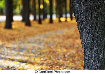 公園, 秋