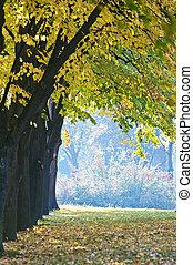 公園, 秋, 秋