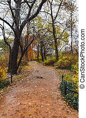 公園, 秋, 都市, 歩きなさい, によって