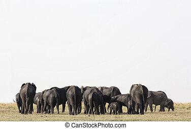 公園, 象, etosha, ナミビア