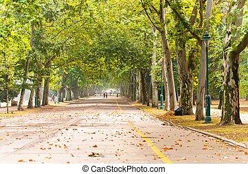 公園, 道, 長い間