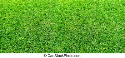 公衆, 使用, ∥あるいは∥, field., 草, 背景。, 公園, 風景, 自然, フィールド, 背景, 手ざわり, 緑