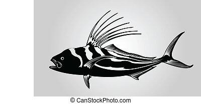 公雞, fish.