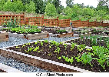 共同体, 野菜 庭
