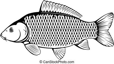 共通, 鯉, 黒, 白