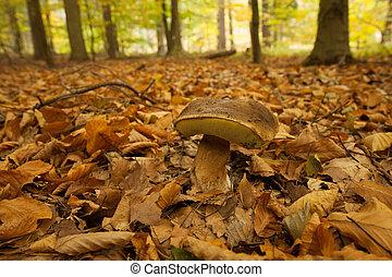 关闭, 射击, 在中, a, 蘑菇, 在上, 在前面