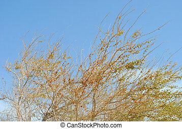 关闭, savannah, 树, 正午