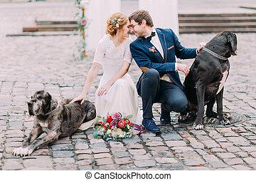 其他, 婚禮, 他們, softly, 每一個, 坐, 看, 腰臀部分, 狗, 夫婦, 時髦, purebred, 二