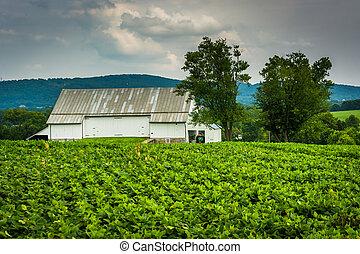 具有历史意义, 谷仓, 同时,, 农场, 领域, 在, antietam国家的战场, maryland.