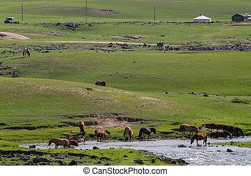 典型的, ステップ, 風景, mongolian