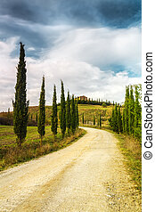 典型, 風景, ......的, tuscany