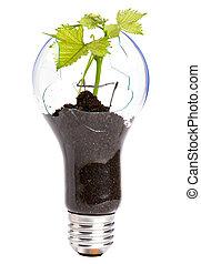 内部のlightbulb, 成長する, 植物