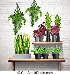 内部, 植物, 家, 現実的