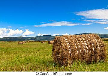 内部, mongolia, 牧草地