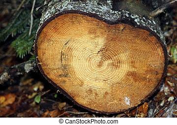 円, グランジ, 手ざわり, 薄く切られる, wood., 背景