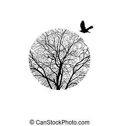 円, 木の 冬