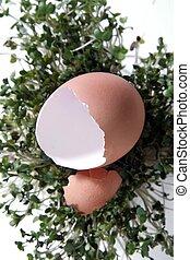 写真の 処理, ファンタジー, 背景, デジタル, 割れた, 卵