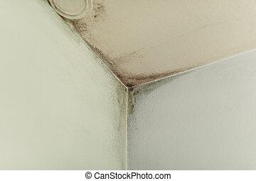 写真, かびなさい, 部屋, 株, コーナー, 壁