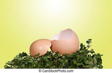 写真, デジタル, ファンタジー, 背景, 処理, 割れた, 開いた, 卵