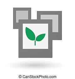 写真, 植物, グループ, 隔離された