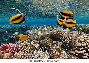写真, 珊瑚, 植民地