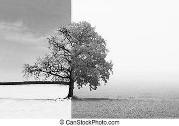 写真, 白, 孤独, 木, 黒