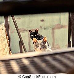 写真, 都市, 株, watching., space., 黒, animal., 空電, ホームレスである, ねこ