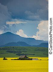 农场房子, 在中, 领域, 在中, canola