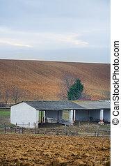 农场, 母牛