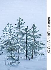 冬ツリー, 霜, 湖の海岸, 日, 松