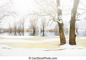 冬天樹, 用 霜 蓋