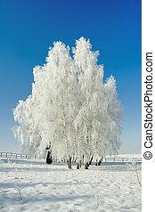冬天風景, 以及, 樹
