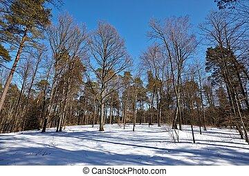 冬天, 公園