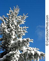 冬天, 樅樹, 在下面, 雪