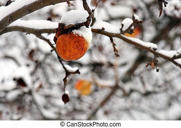 冬天, 蘋果, 在, 樹
